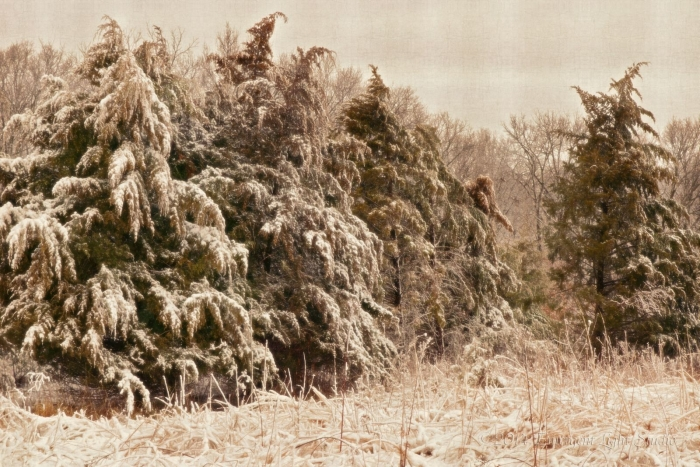 Cold Beauty of the Winter Prairielands