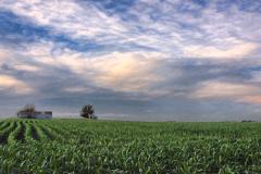 Farm Field in Early Summer