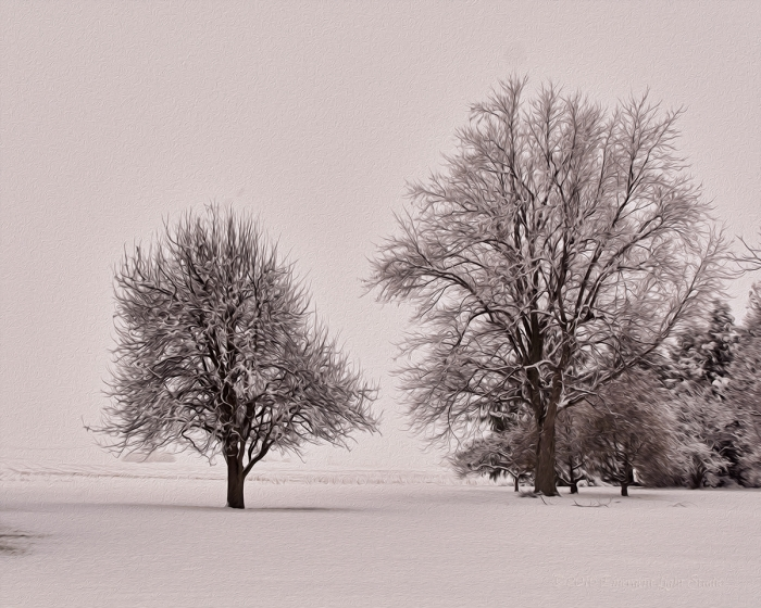 Prairie Trees after Snowfall