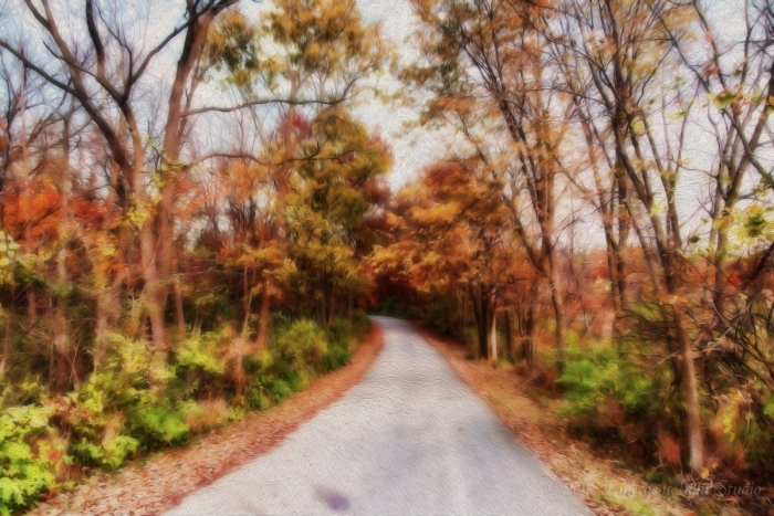 On a Country Road in the Fall