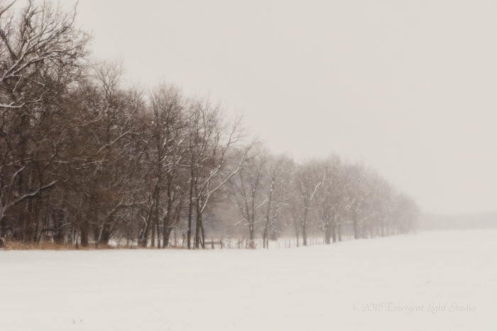 Tree Line in Prairie Snow Storm