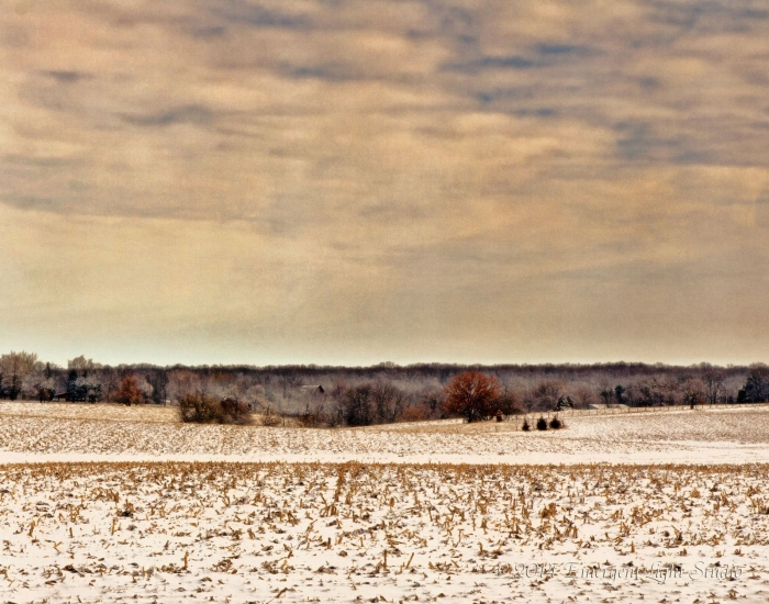Cold is the woodland beyond the prairie field