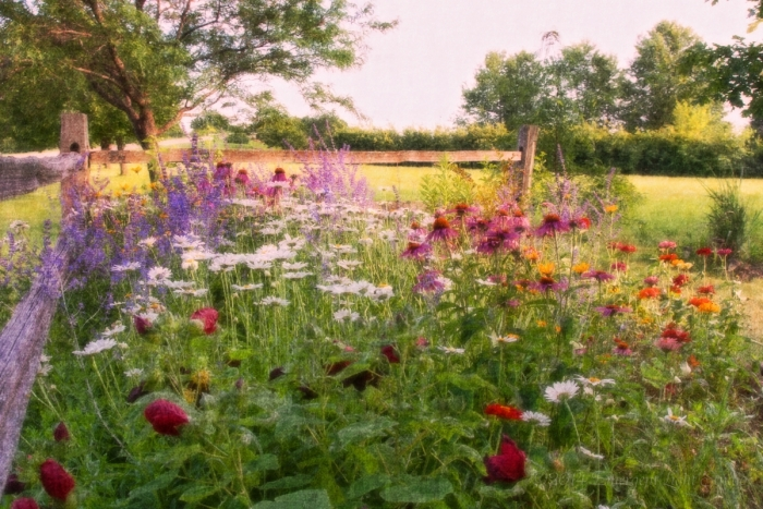 Country Flower Patch