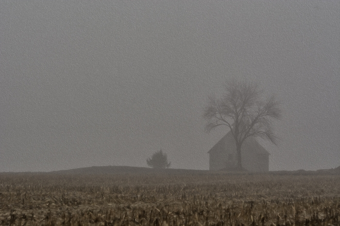 Cold and Foggy Country Morning