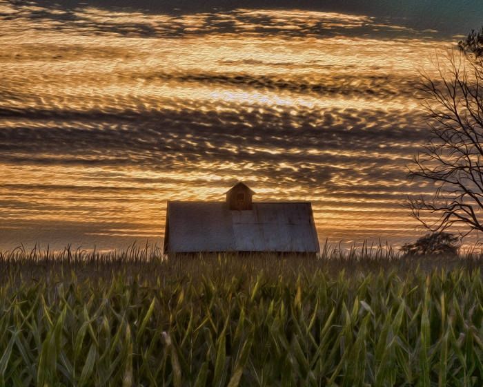 Corn Field and Crib at Sunset