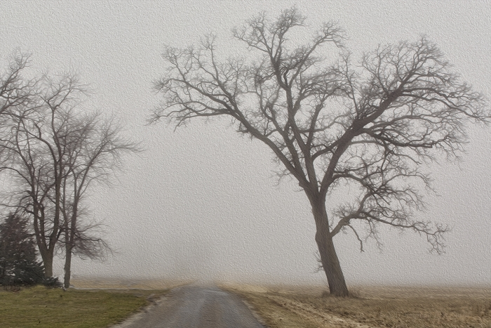 Country Road in Winter Fog
