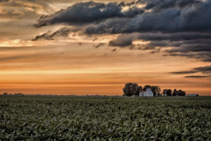 Farm Field under a Sunset Sky