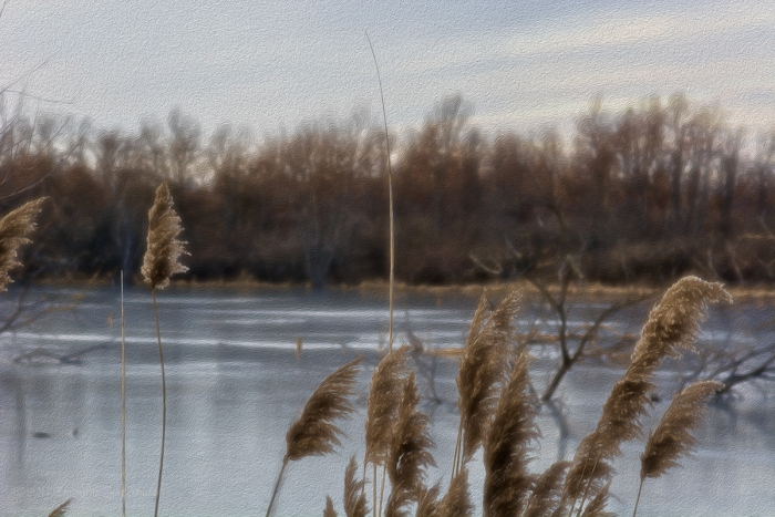 Foxtails at an Icy River