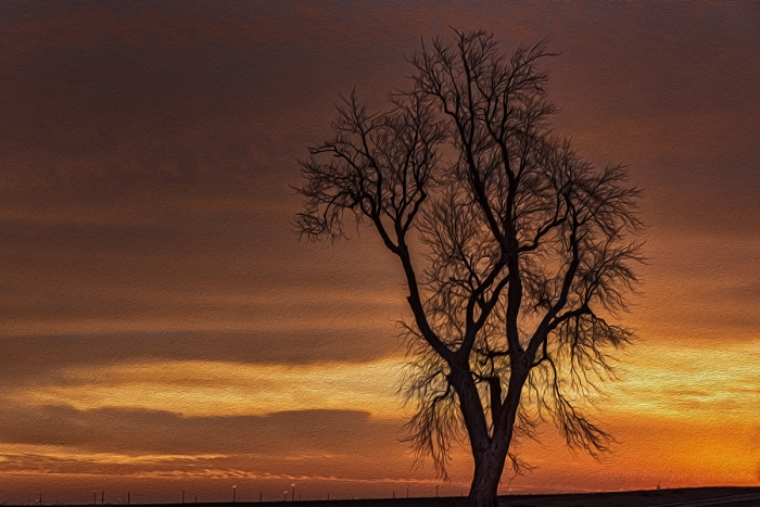 Old Prairie Tree in the Prairie Sunset