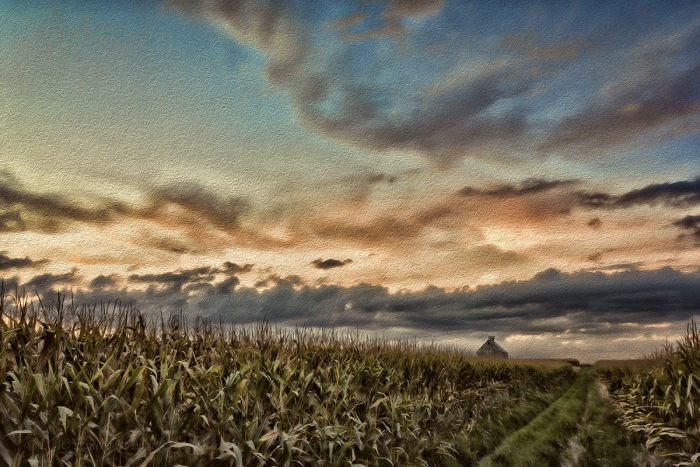 Prairie Corn Field under a Fall Sky