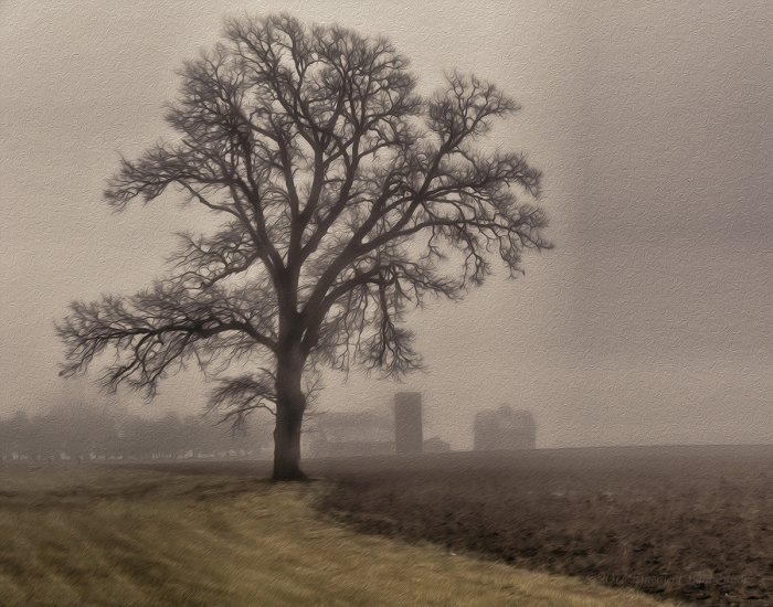 Prairie Farm in Winter Fog
