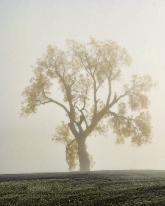 Prairie Tree in November Morning Fog