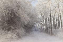 Winter Pass through Prairie Woodlands