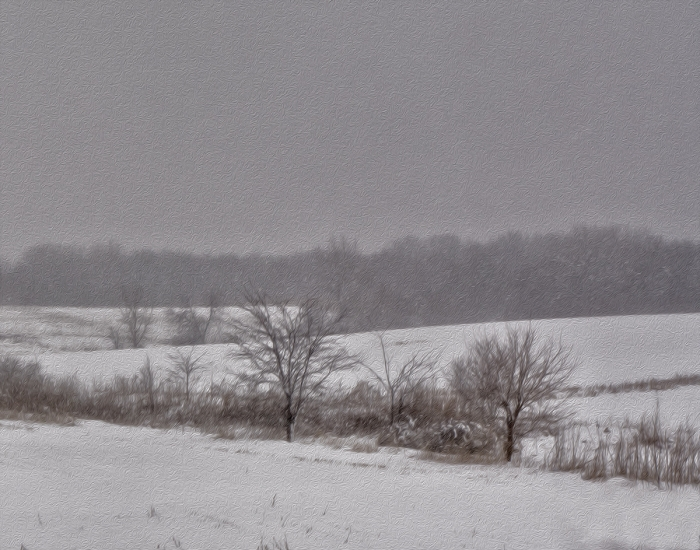 Winter Prairie Landscape