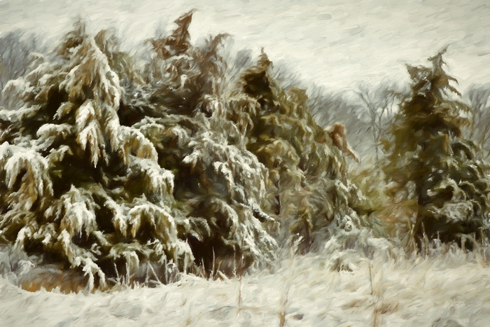 Prairie Trees in Winter Wind